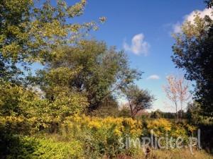 wrzesien jesien zdjęcia galeria wydarzenia