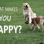 Czy istnieje przepis na szczęście?
