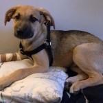Wszystko, co powinniście wiedzieć o adopcji psa. Część I