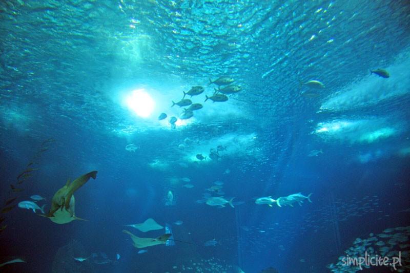 oceanarium_8
