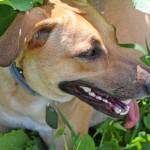 5 rzeczy, których powinieneś nauczyć się od psa