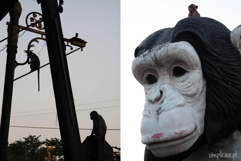 tajlandia-przewodnik-co-warto-zobaczyc-lop-buri-20