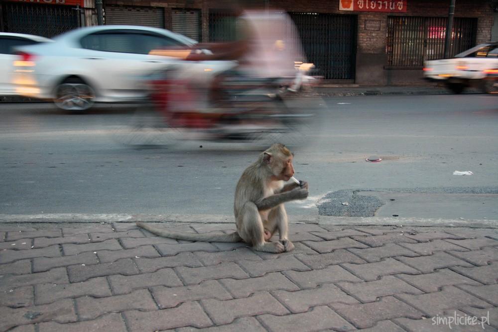 tajlandia-przewodnik-co-warto-zobaczyc-lop-buri-6