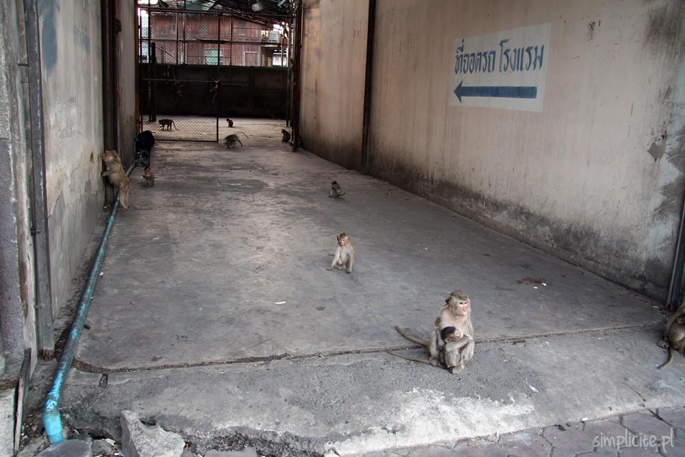 tajlandia-przewodnik-co-warto-zobaczyc-lop-buri-9