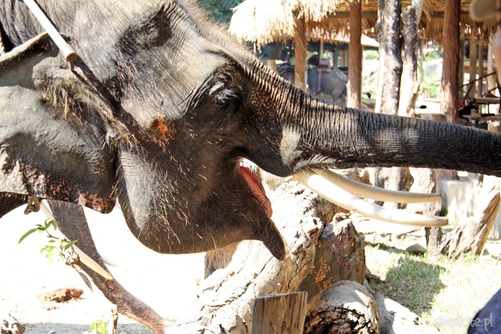tajlandia-chiang-mai-elephant-camp-11