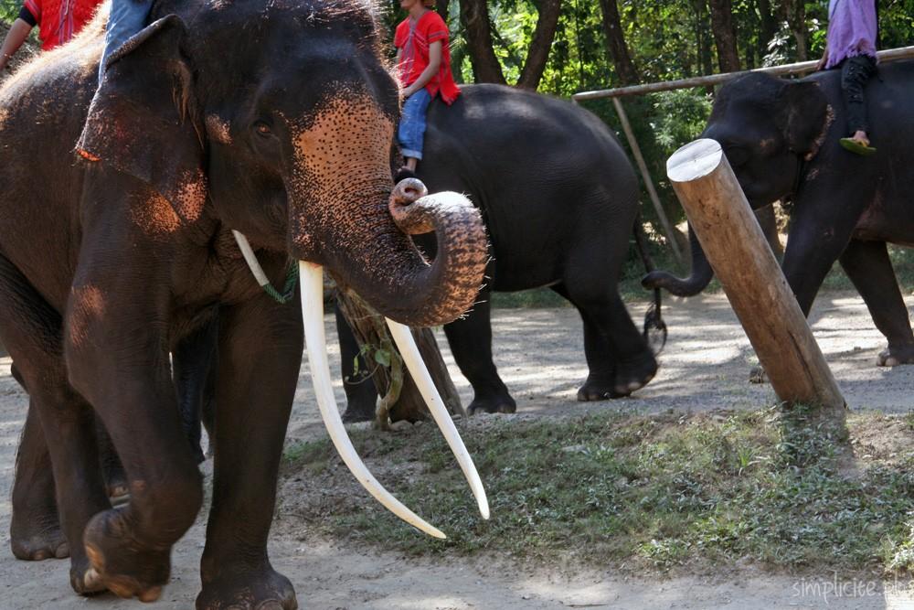 tajlandia-chiang-mai-elephant-camp-12