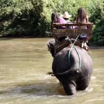 Tajlandia. Co warto zobaczyć? Chiang Mai i okolice, czyli słonie, tygrysy i nocne zakupy