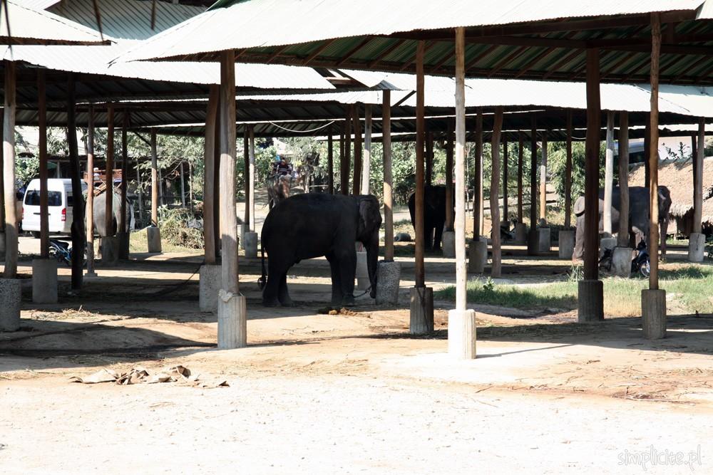 tajlandia-chiang-mai-elephant-camp-2