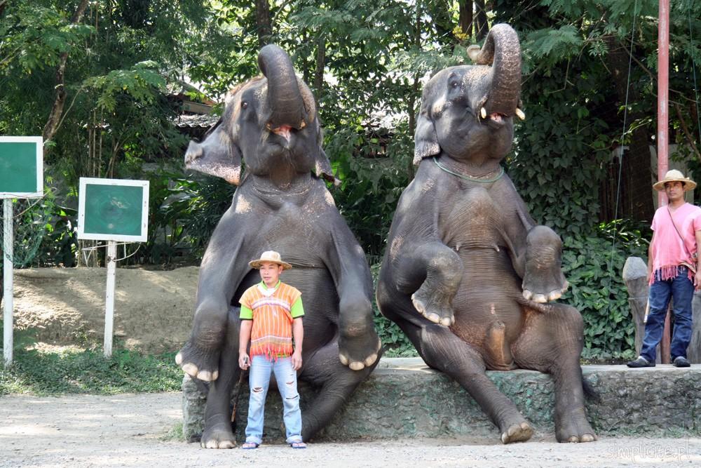 tajlandia-chiang-mai-elephant-camp-3