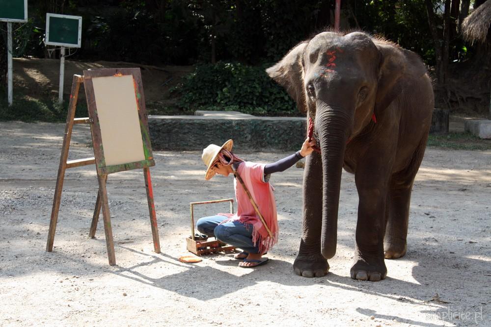 tajlandia-chiang-mai-elephant-camp-4