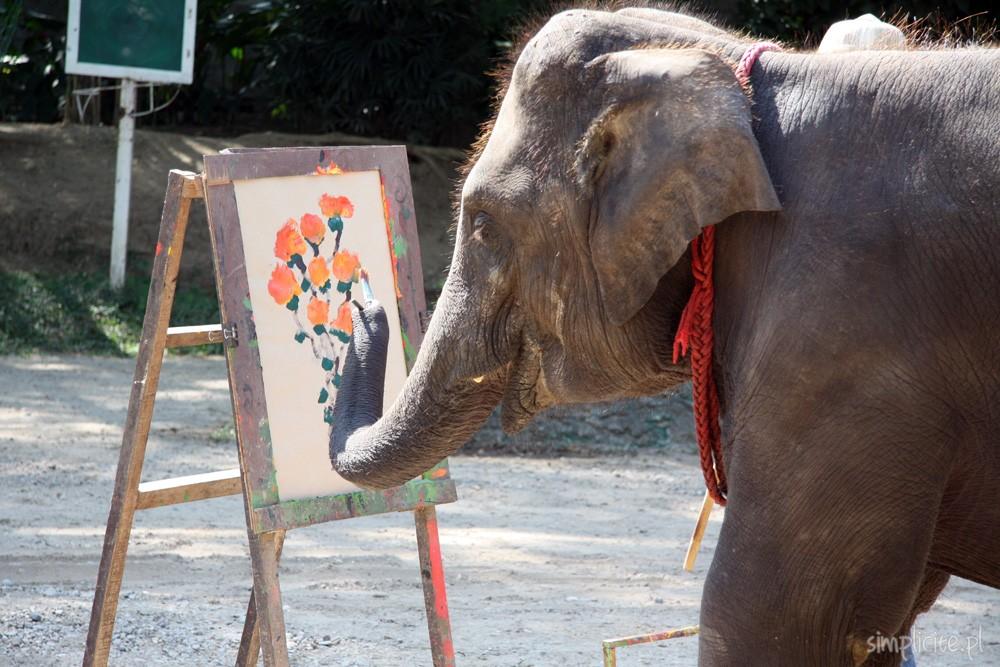 tajlandia-chiang-mai-elephant-camp-5
