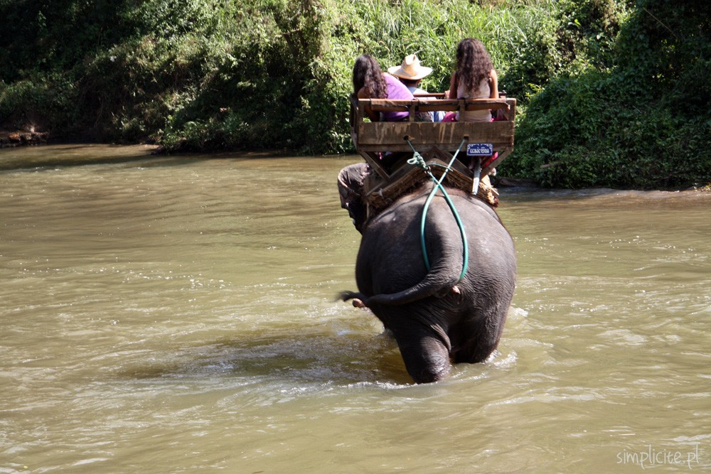 tajlandia-chiang-mai-elephant-camp-7
