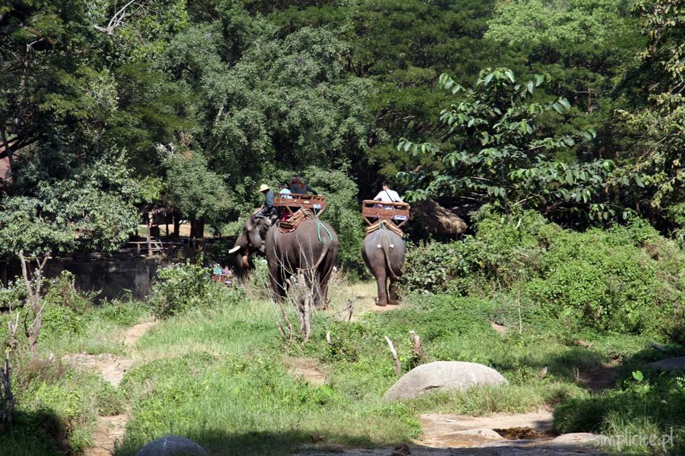 tajlandia-chiang-mai-elephant-camp-8
