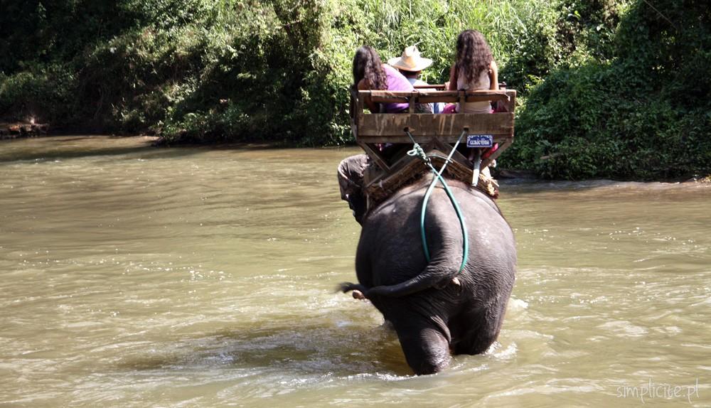 tajlandia-chiang-mai-elephant-camp